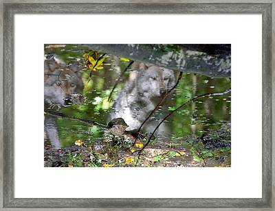 Spirits Of Wolves Framed Print by Scott Mahon