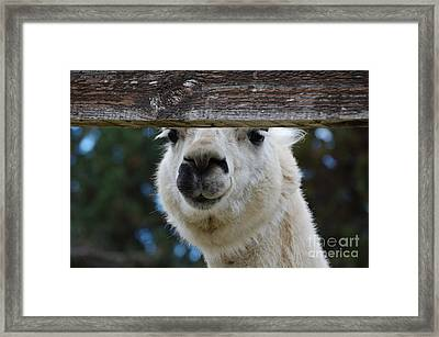 Spit Framed Print by Diane E Berry