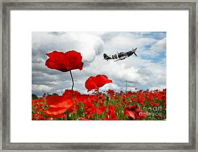 Spitfire Over The Poppy Framed Print