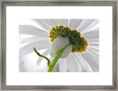 Spittle Bug Umbrella Framed Print