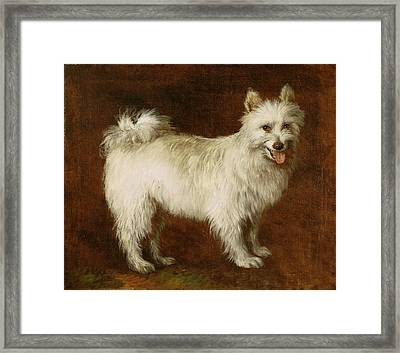 Spitz Dog Framed Print by Thomas Gainsborough