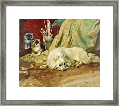 Spitz Dog With Two Kittens Beside  Framed Print by MotionAge Designs