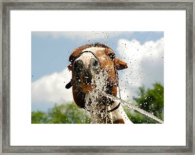 Splash In The Face Framed Print by Joy Alfandre