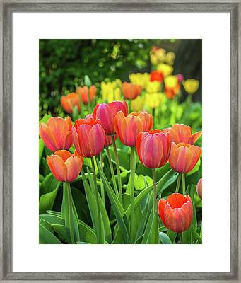 Framed Print featuring the photograph Splash Of April Color by Bill Pevlor
