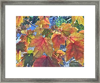 Splash Of Autummmmmm Framed Print