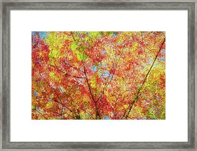 Splash Of Autumn Framed Print