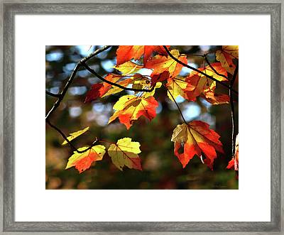 Splash Of Color Framed Print by Mikki Cucuzzo