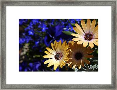 Splash Of Color Framed Print by Off The Beaten Path Photography - Andrew Alexander