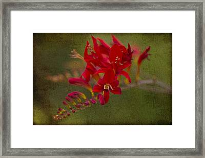 Splash Of Red. Framed Print