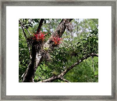 Splash Of Red Framed Print