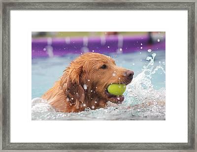 Splashing Around Framed Print