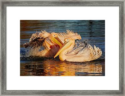 Splashing Fun For Two Framed Print by Nick Biemans