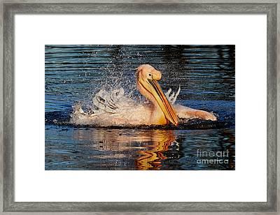 Splashing Fun Framed Print by Nick Biemans