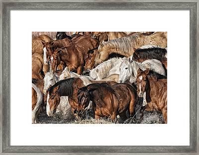 Splashing Horses Framed Print