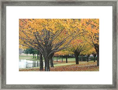 Splendid Park Framed Print by David Wahome
