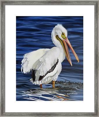 Splendor At Half Moon Island Framed Print by Phyllis Beiser