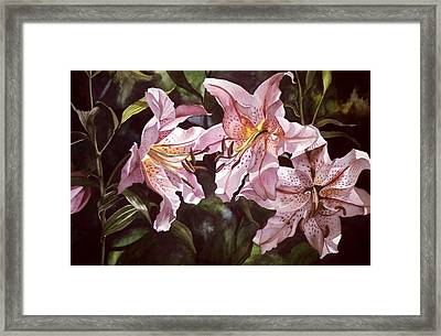 Splendor In Pink Framed Print by Alfred Ng