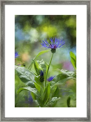 Splendor In The Garden Framed Print by Belinda Greb