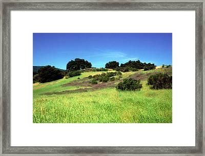 Splendor In The Grass Framed Print by Kathy Yates