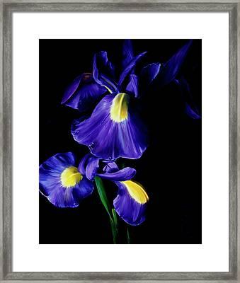 Splendor Framed Print