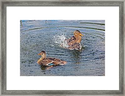 Splish Splash Framed Print by Asbed Iskedjian