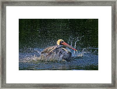 Framed Print featuring the photograph Splish Splash by HH Photography of Florida