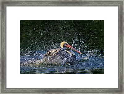 Splish Splash Framed Print by HH Photography of Florida