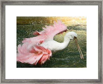 Splish Splash I'm Taking A Bath Framed Print by Emmy Marie Vickers
