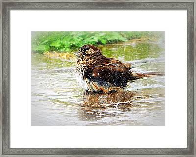 Splish Splash Framed Print by Karen Cook