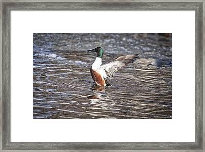 Splish Splash Framed Print by Lynn Hopwood