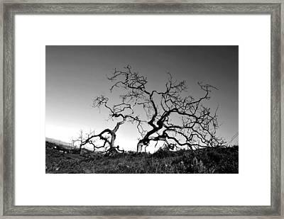 Split Single Tree On Hillside - Black And White Framed Print