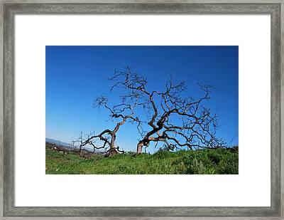 Split Single Tree On Hillside Framed Print
