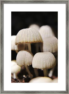 Split Tree Colony 3 Framed Print