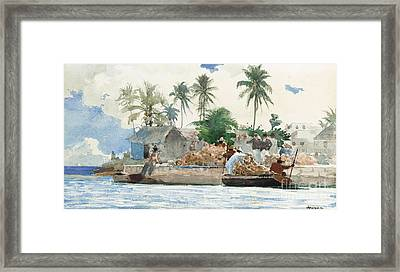 Sponge Fisherman In The Bahama Framed Print by Winslow Homer
