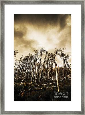 Spooky Dark Woods Framed Print