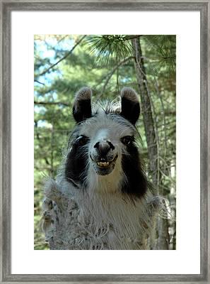 Framed Print featuring the photograph Spooky Llama by LeeAnn McLaneGoetz McLaneGoetzStudioLLCcom