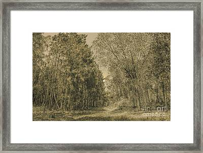 Spooky Old Woods Framed Print