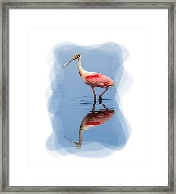 Spoonbill 3 Framed Print
