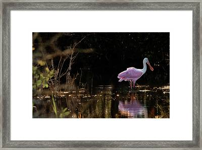 Spoonbill Fishing For Supper Framed Print