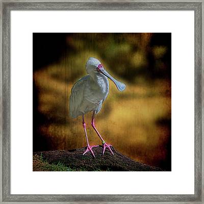 Framed Print featuring the photograph Spoonbill by Lewis Mann
