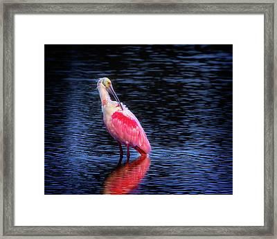 Spoonbill Sunset Framed Print by Mark Andrew Thomas
