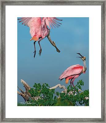 Spoonbills Greeting Framed Print by Tim Fitzharris