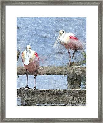 Spoonbills Hanging Out Framed Print