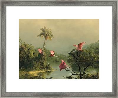 Spoonbills In The Mist Framed Print