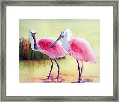 Spoonbills Framed Print by Judy Mercer