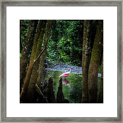 Spooning Framed Print by Marvin Spates
