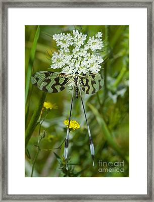 Spoonwing Framed Print by Steen Drozd Lund