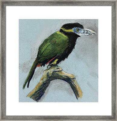 Spot-billed Toucanet Framed Print by Nelson Caramico