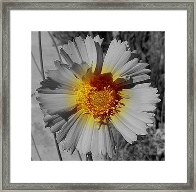 Spot On Framed Print