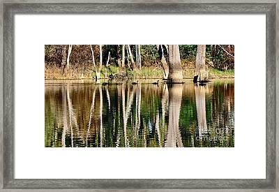 Spot The Swan Family Framed Print by Kaye Menner